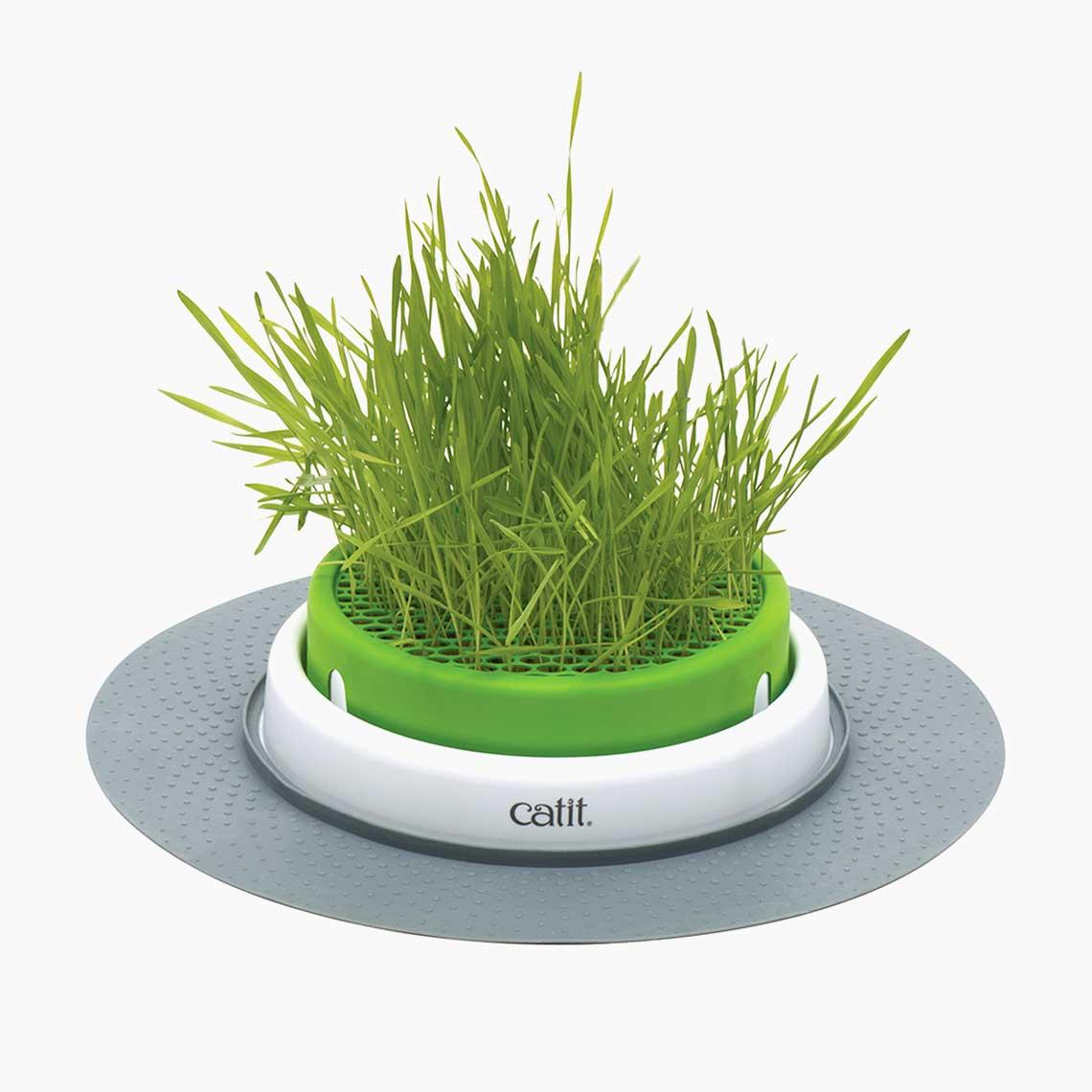 Senses 2.0 Grass Planter