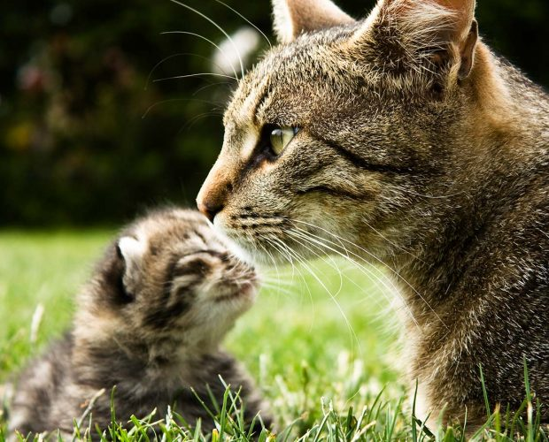 Introducing your kitten to other pets - blog