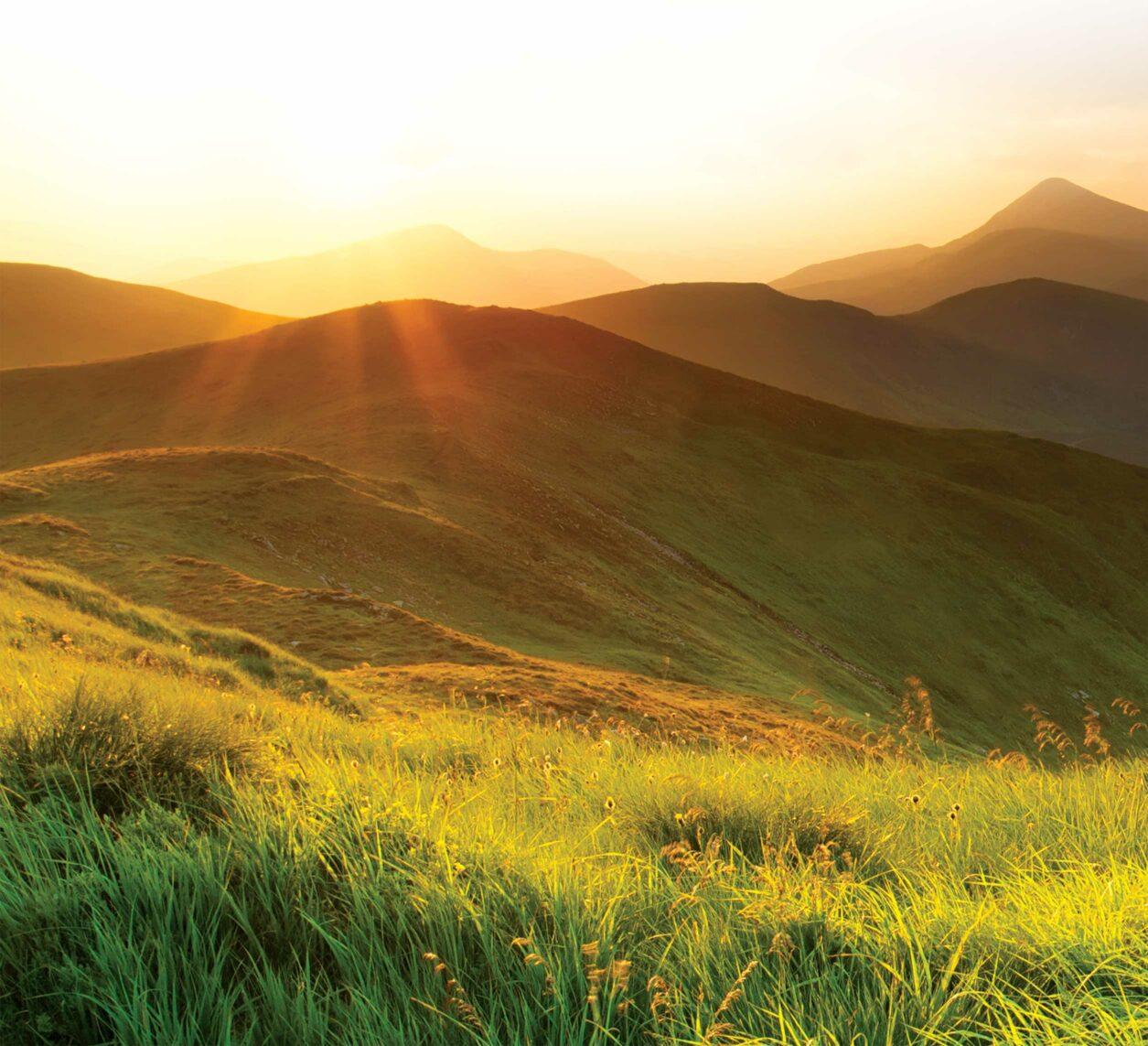 Gold Fern - meadow New Zealand