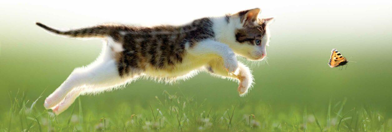 Catit Nuna - Cat catching butterfly