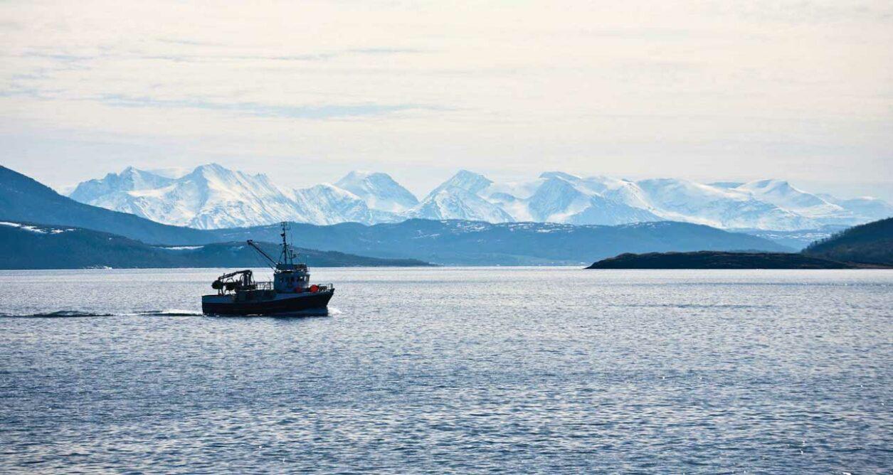 Catit Nuna - Sustainably sourced fish
