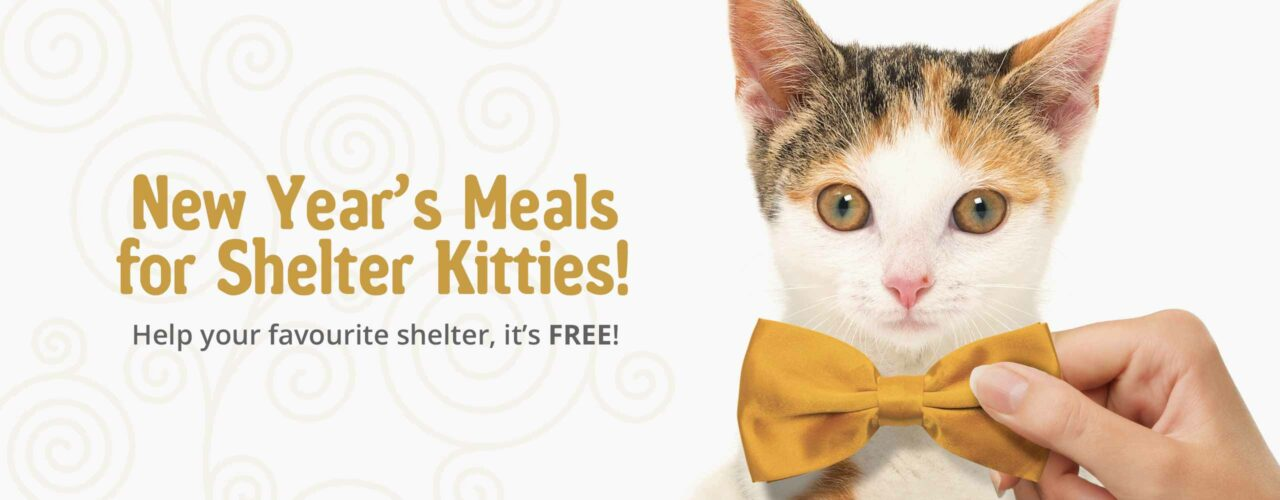 New year's meals for shelter kitties